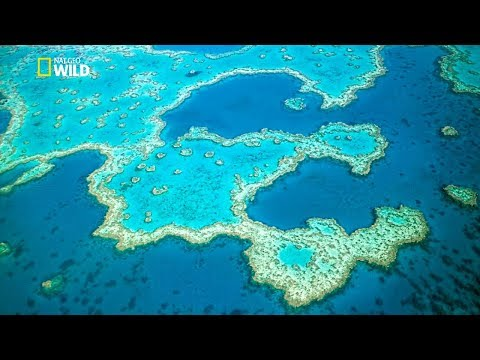 Belize - in North America - Thousand Wonders
