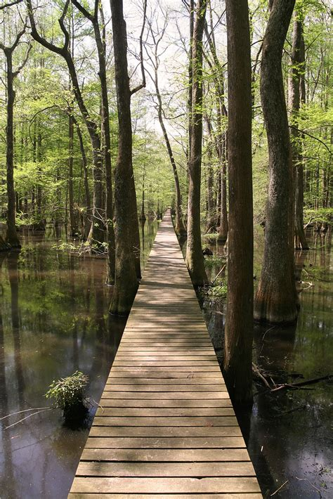 Boardwalk at Lake Chicot State Park | This weekend I hiked