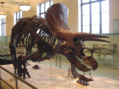 Hall of Dinosaurs - Triceratops Skeleton | Triceratops