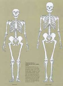 Who was Neanderthal Man?