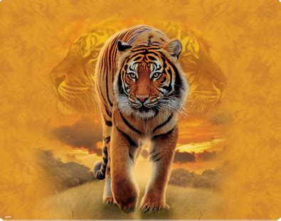 The Tiger Rising - Crow Lake & The Tiger Rising