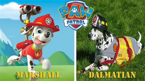 Paw Patrol Characters in Real Life - YouTube